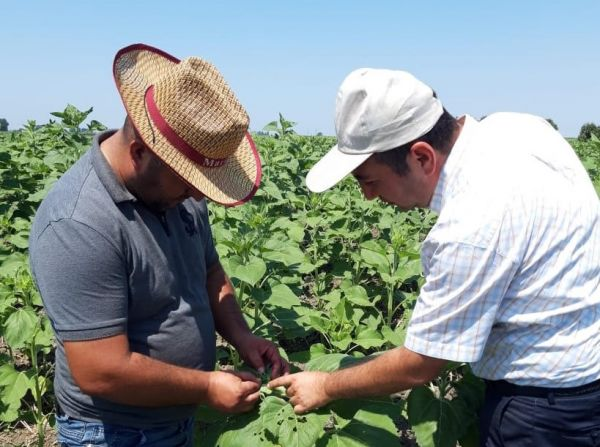 The EU and FAO UN create platforms of agricultural advisory services